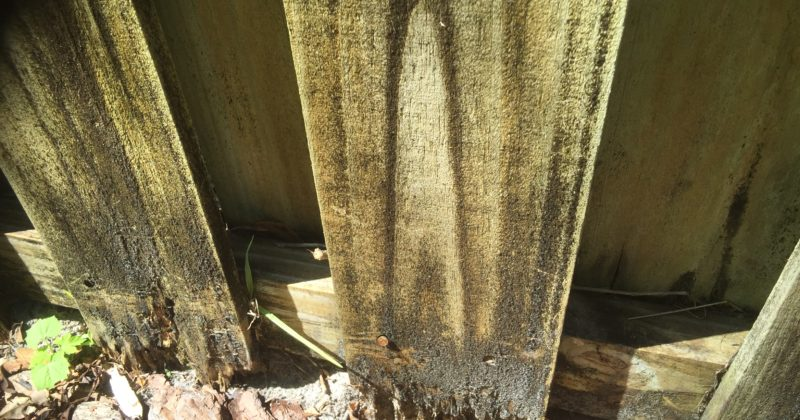 Understanding Pressure-Treated Lumber and Wood Fence